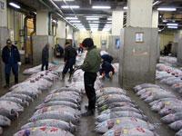 Tsukiji -Mercado central-