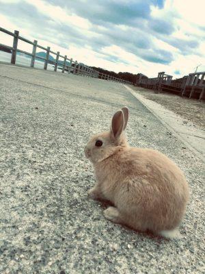 Cómo interactuar con los conejos de Okunoshima