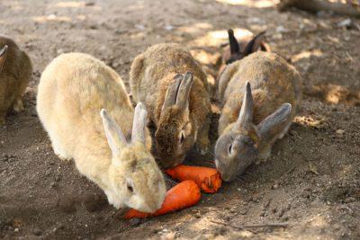 Okunoshima : Isla de los conejos
