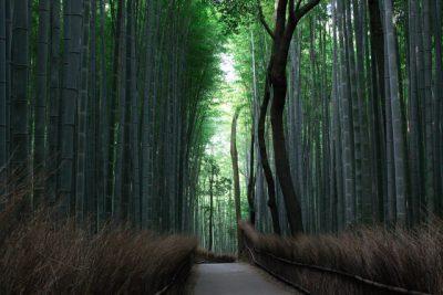 Kioto: 5 Lugares recomendados para visitar