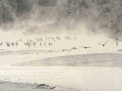 Aves y animales salvajes en el invierno de Hokkaido (6 días)