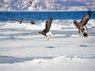aves en hokkaido