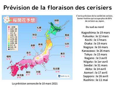 La flor Sakura (cerezo en flor)